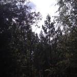 Åpning i skogen, retning sørover
