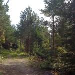 Åpning i skogen og traktorvei