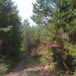 Åpning i skogen, retning nordover